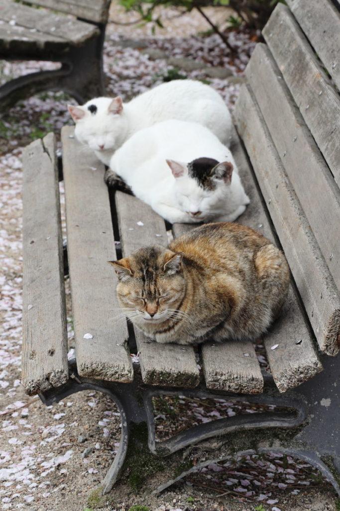 夙川の猫 2019年4月11日