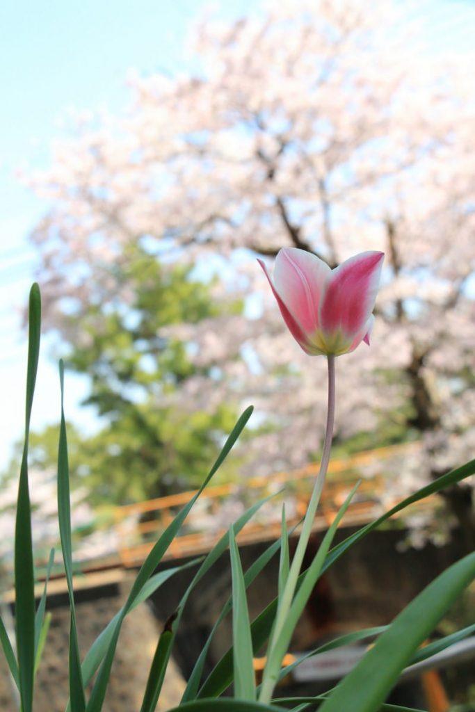 キットレンズで撮影した花の写真