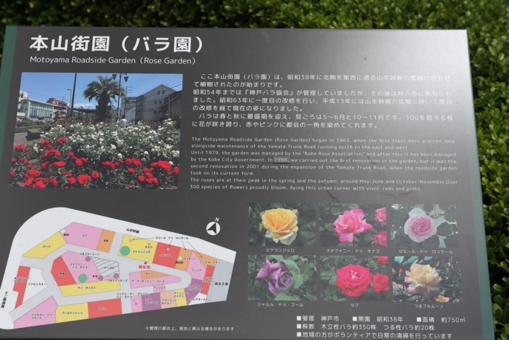本山街園 バラ園