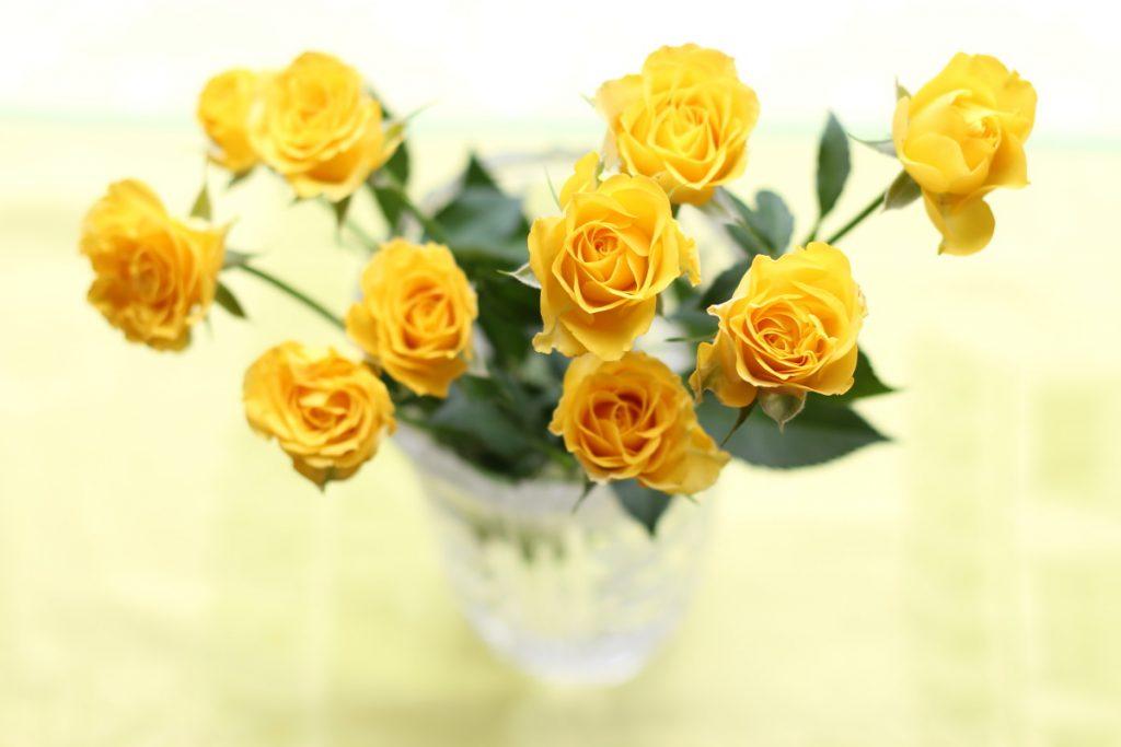 バラの花 スプレーローズ