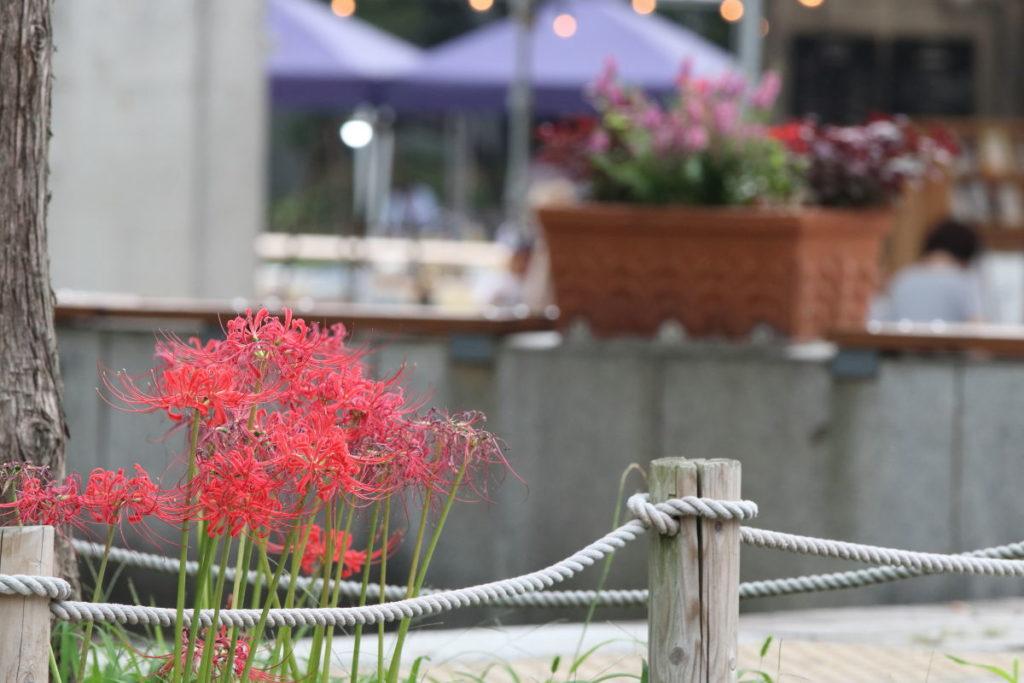 彼岸花の作例写真 背景にその場所の雰囲気がわかるものをいれる