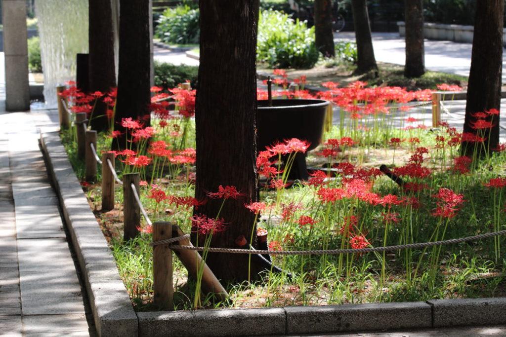 三宮・東遊園地(神戸市・中央区)の彼岸花
