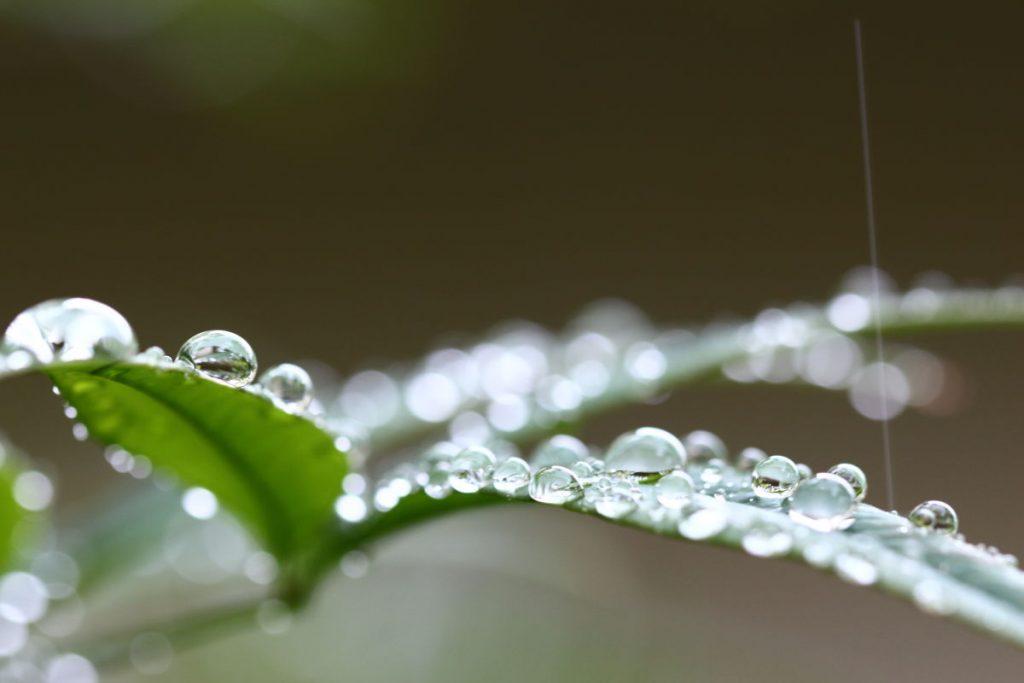 タムロン SP 90mm F2.8 Di MACRO 1:1 VC USD F004E 通称タムキューの作例写真 葉っぱの上の水滴