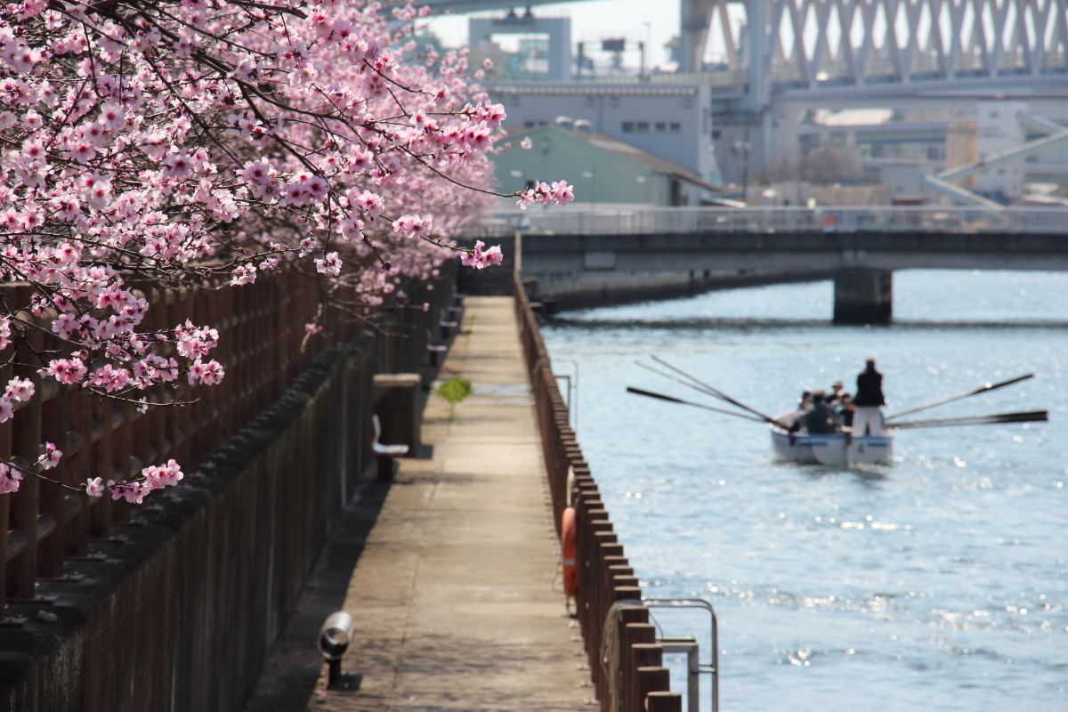 神戸市 東灘区 アーモンド並木と春の水環境フェア