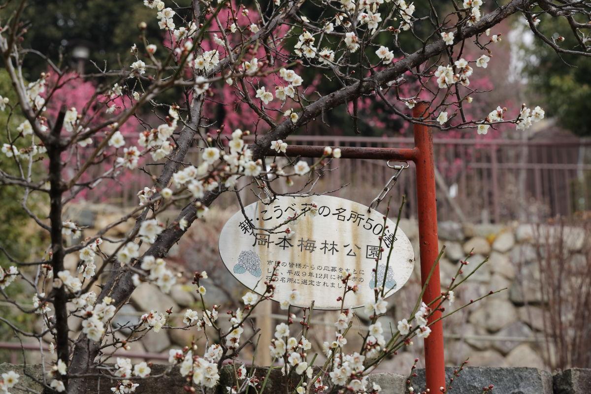 岡本梅林公園(神戸市東灘区)2019年2月7日