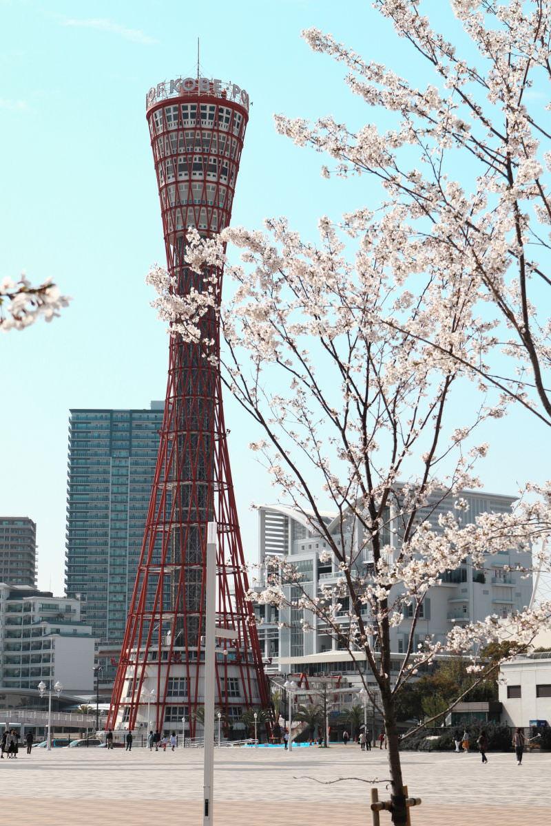 神戸ポートタワーと桜