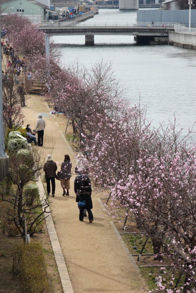 神戸市建設局 東水環境センター アーモンドの並木