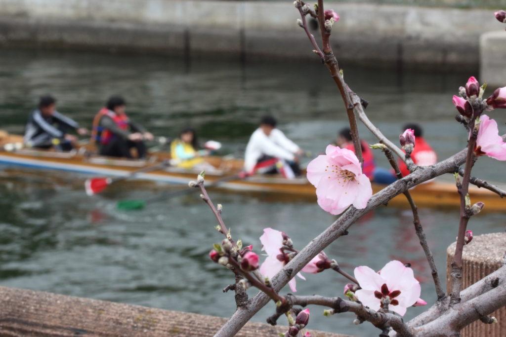 神戸市建設局 東水環境センター アーモンドの木