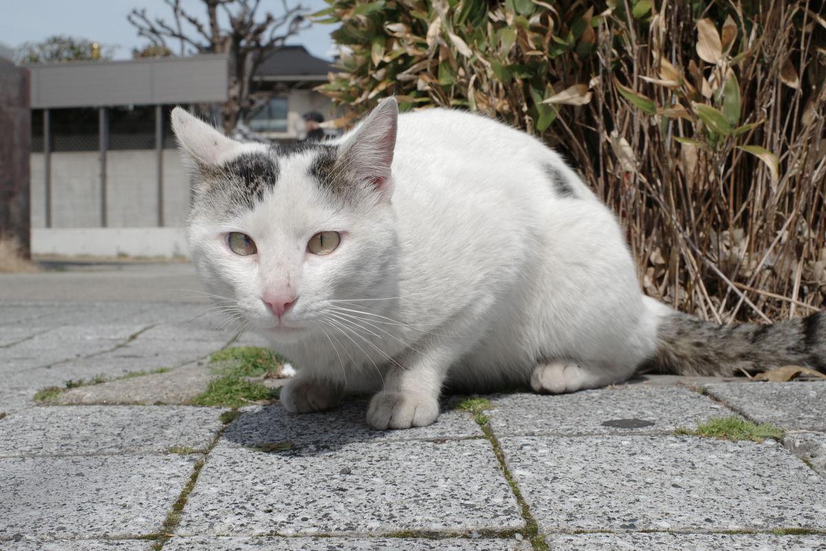リコーGR3作例写真 猫
