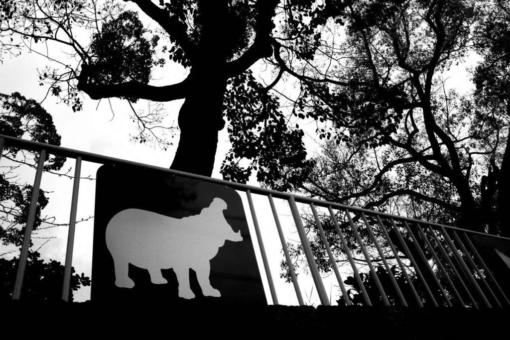 王子動物園をあとにする