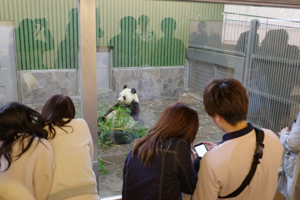 王子動物園のパンダを見るお客さんたち