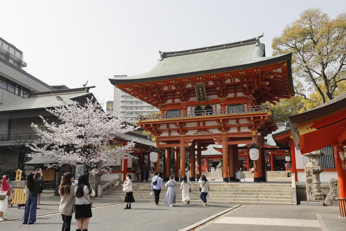生田神社の桜の開花状況 2021年3月29日