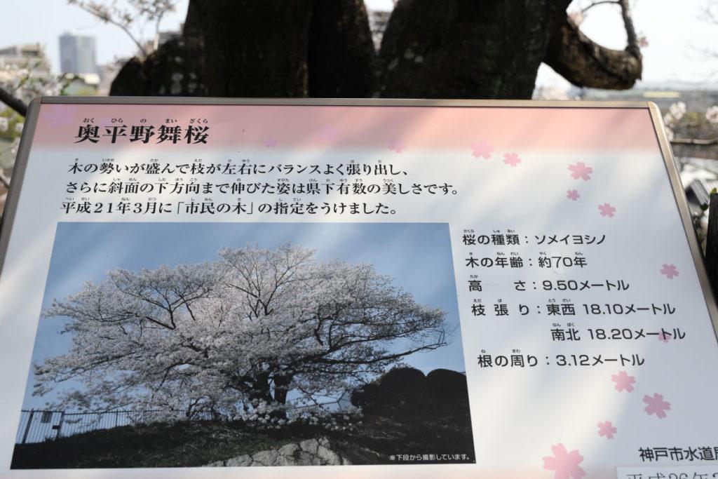 奥平野舞桜 神戸市水の科学博物館