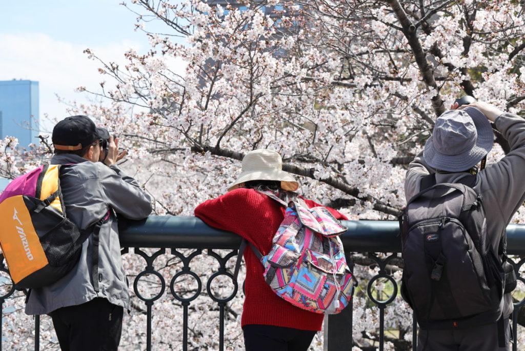 桜を撮る人たち