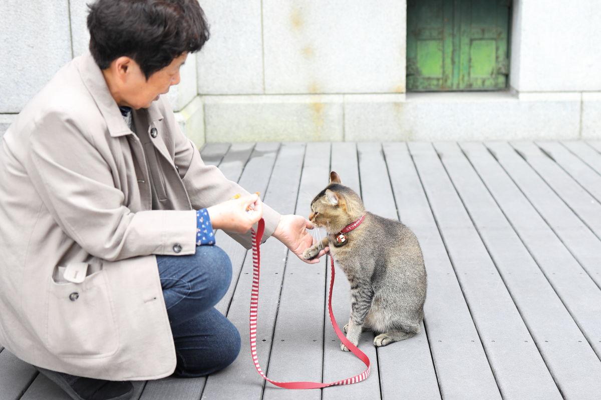 京都文化博物館前の猫