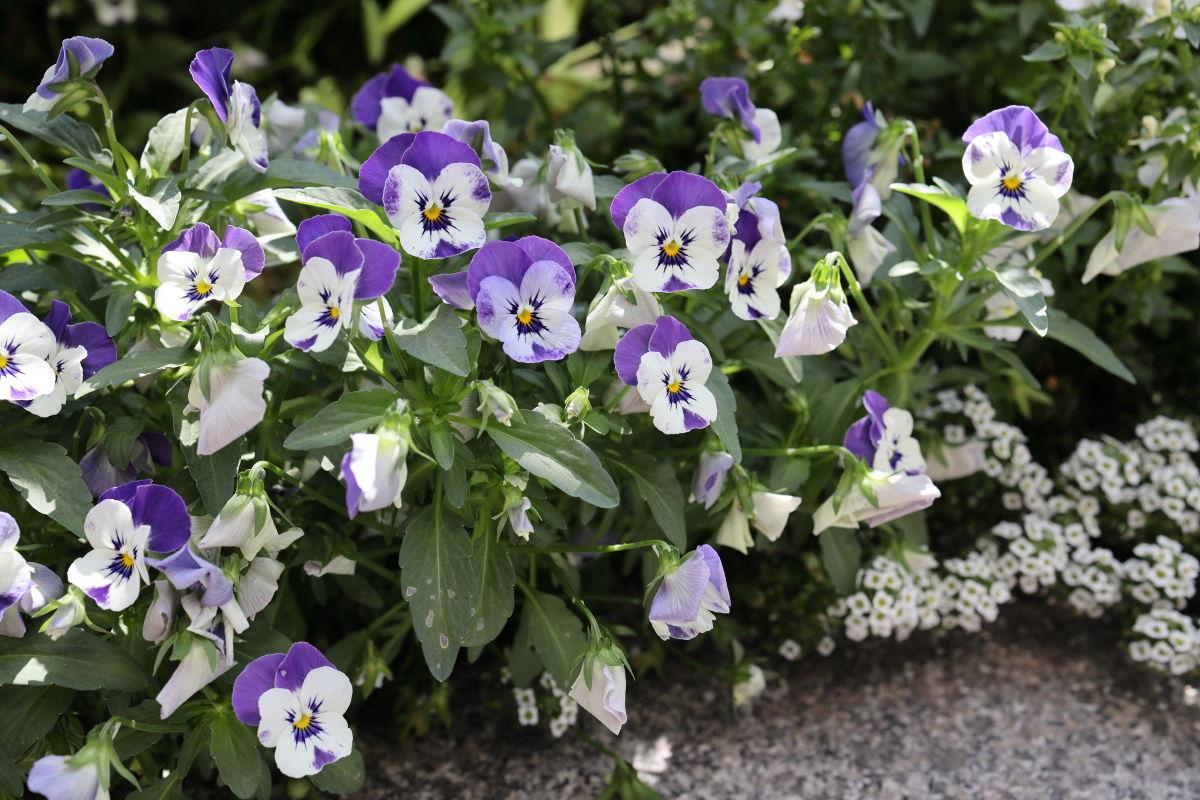 神戸のストリートスナップ お花