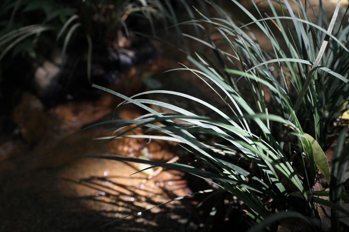 生田の森にて 日の当たる葉っぱ