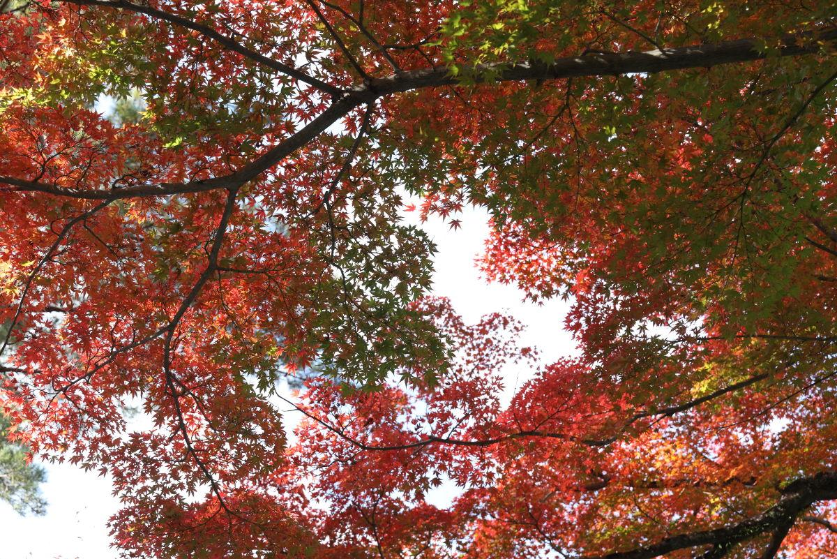 京都の紅葉 南禅寺近く