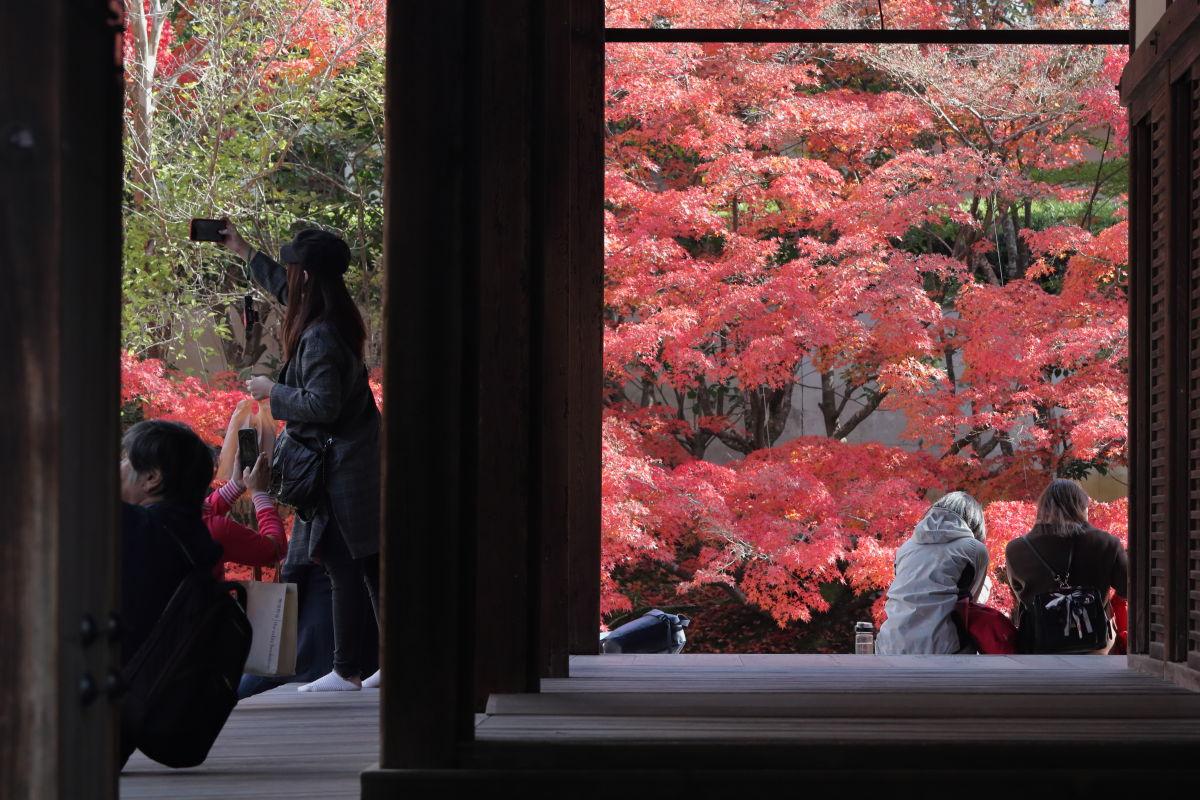 京都 南禅寺の天授庵 紅葉を楽しむ観光客