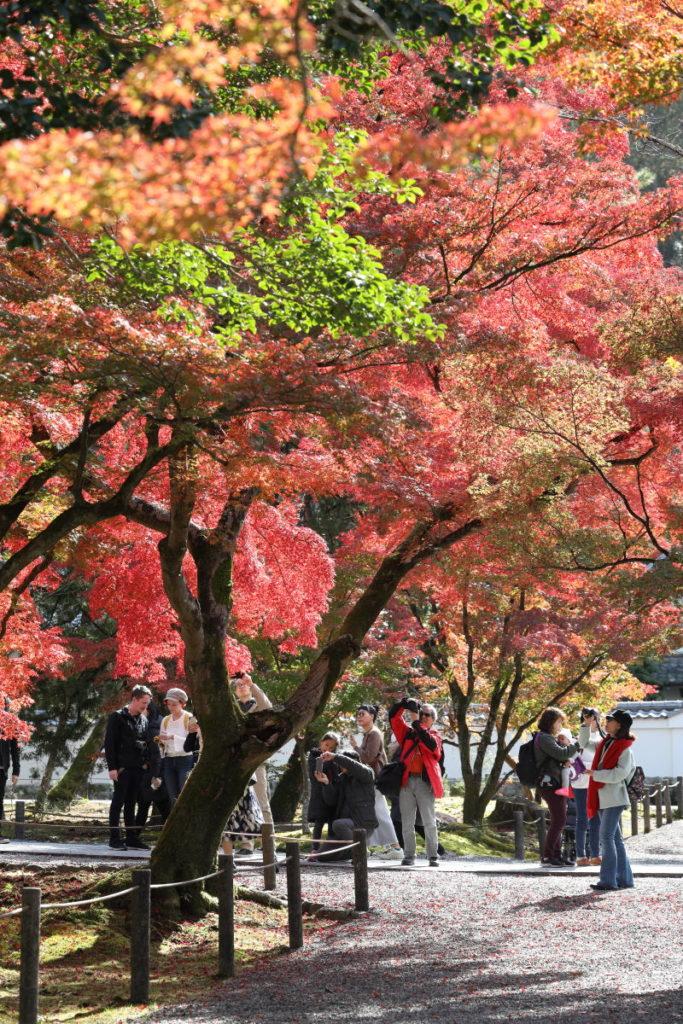 京都 南禅寺の紅葉