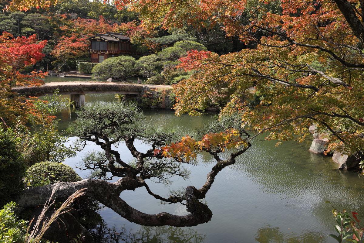 神戸 相楽園の紅葉