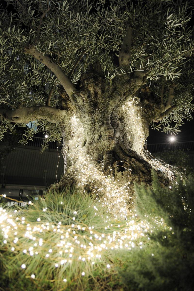 作例写真 夜景 キヤノンカメラ EOS R レンズ RF24-105mm F4L IS USM