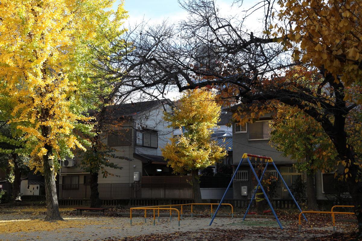 作例写真 秋の公園 RF24-105mm F4 L IS USM