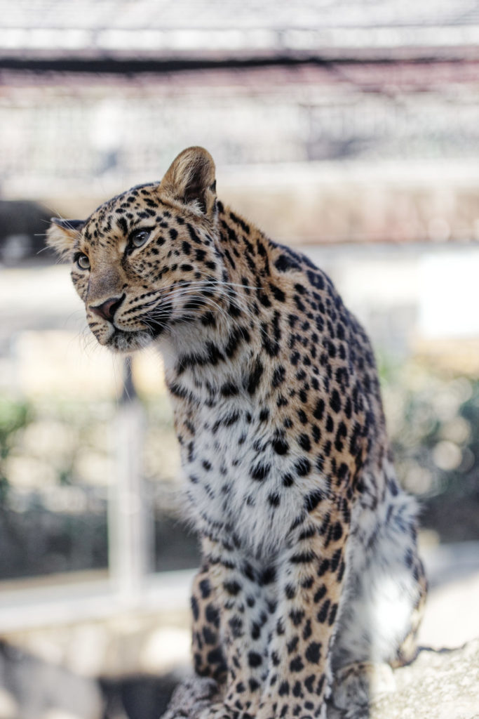 作例写真 SIGMA 50-100mm F1.8 DC HSM Art 神戸市立王子動物園にて
