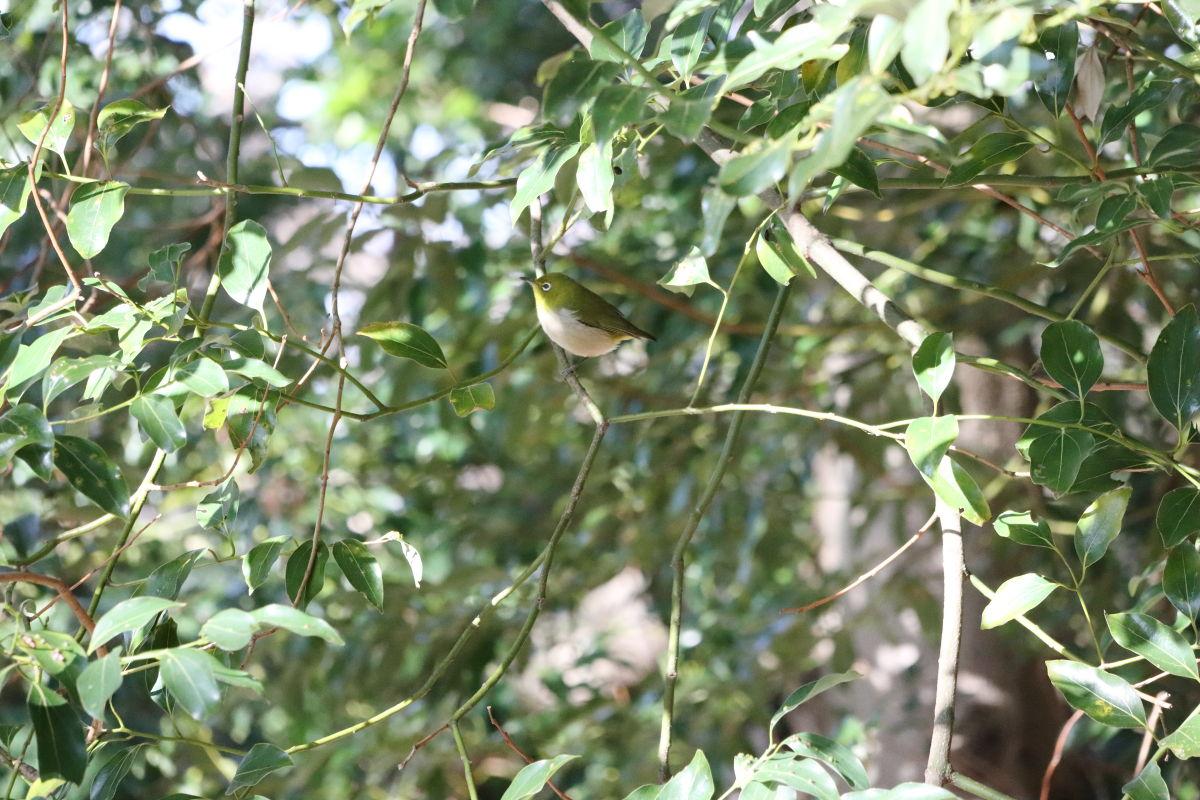保久良神社近くの野鳥
