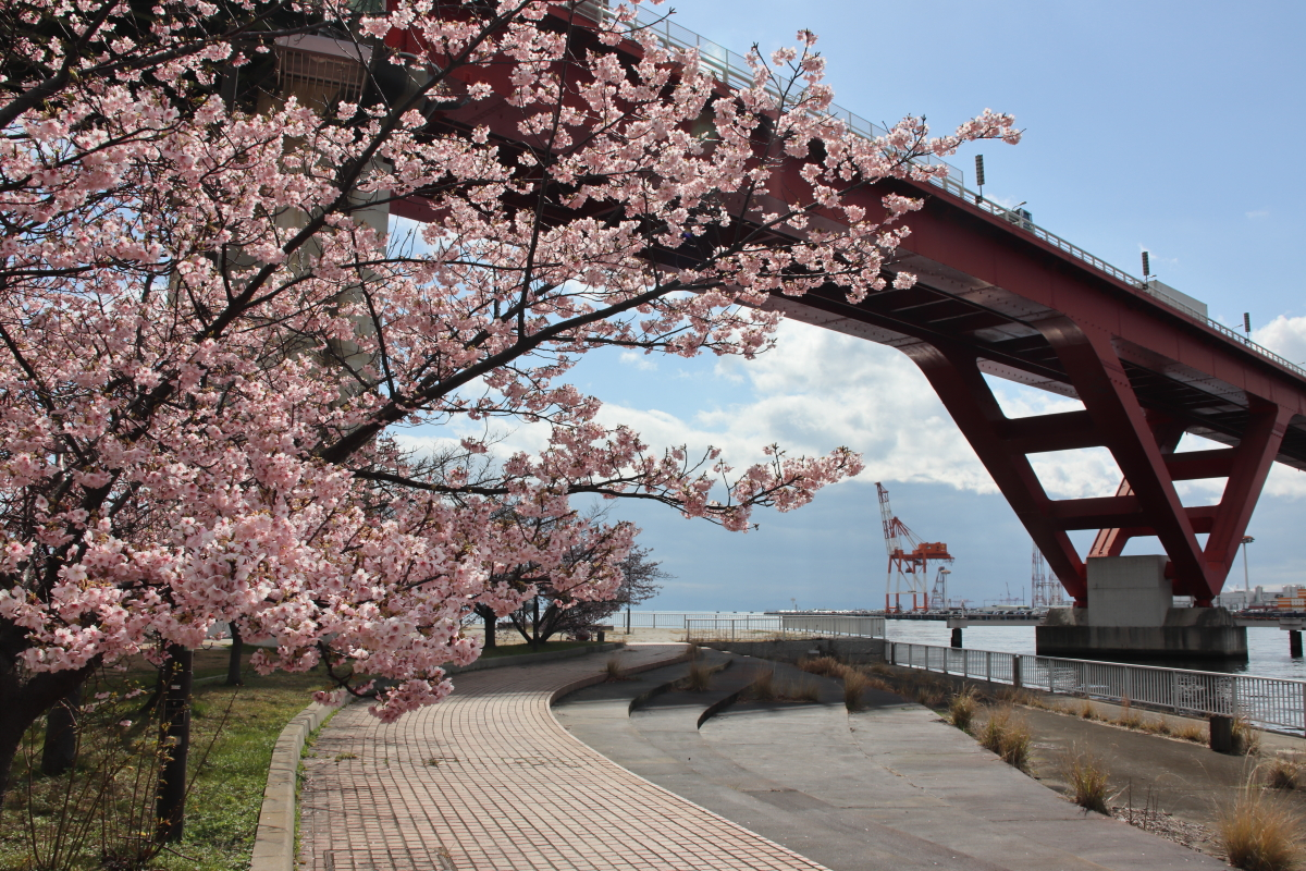 神戸の河津桜の名所!灘浜緑地と西郷川河口公園がおすすめ
