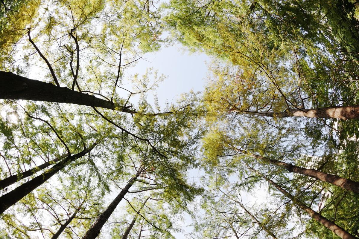 木々 魚眼レンズEF8-15mm F4L Fisheye USM作例写真