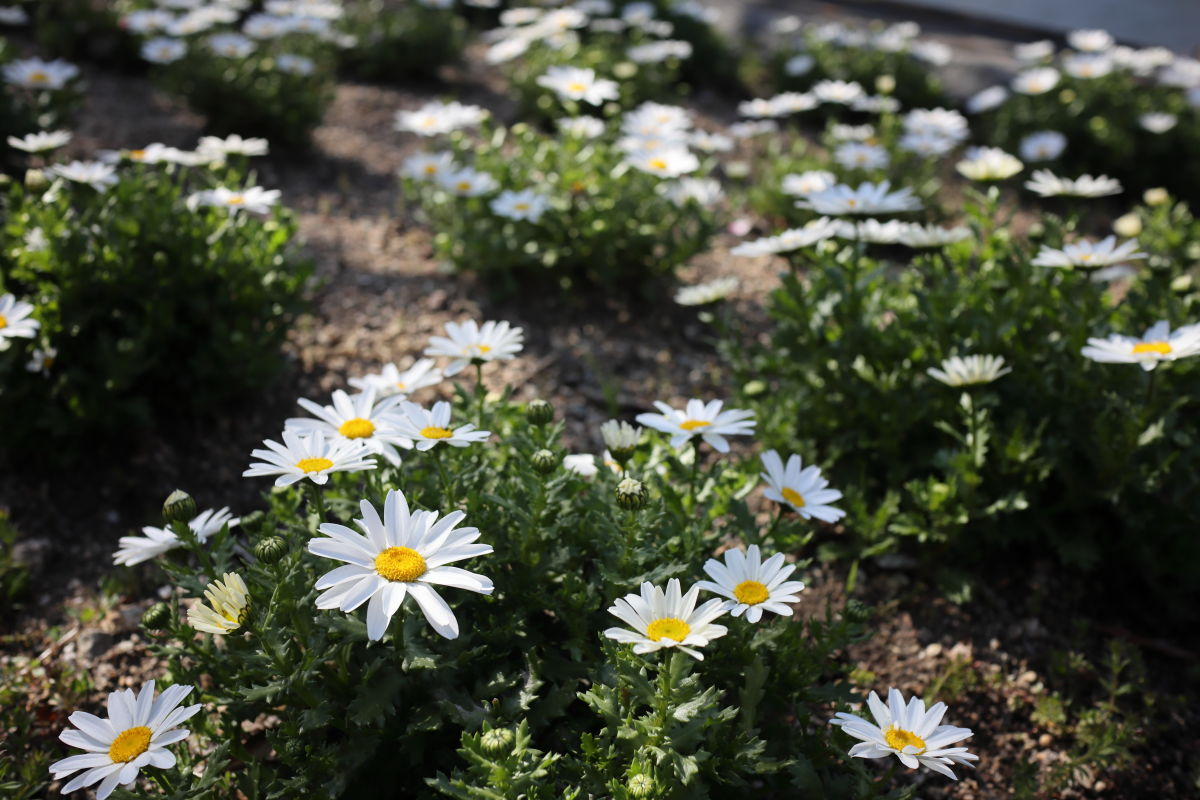 白い花 水辺の遊歩道うおざき