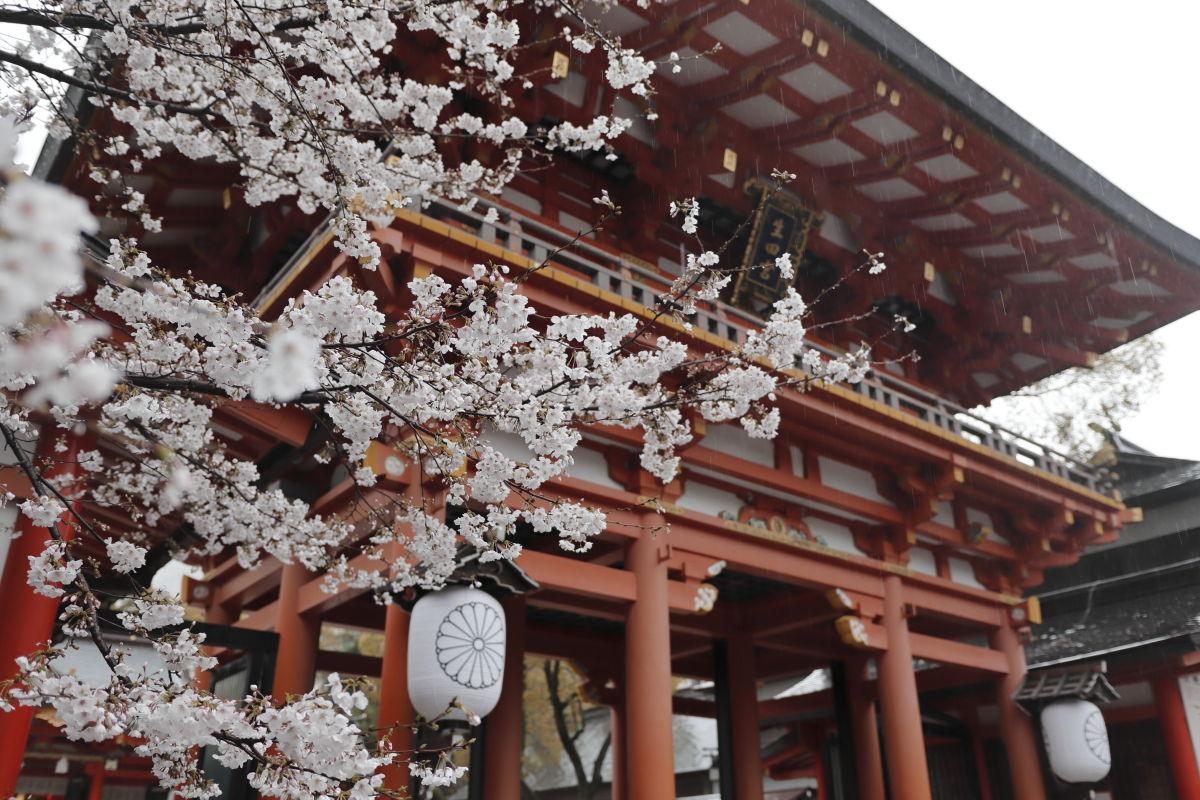 生田神社の桜 2020年4月1日
