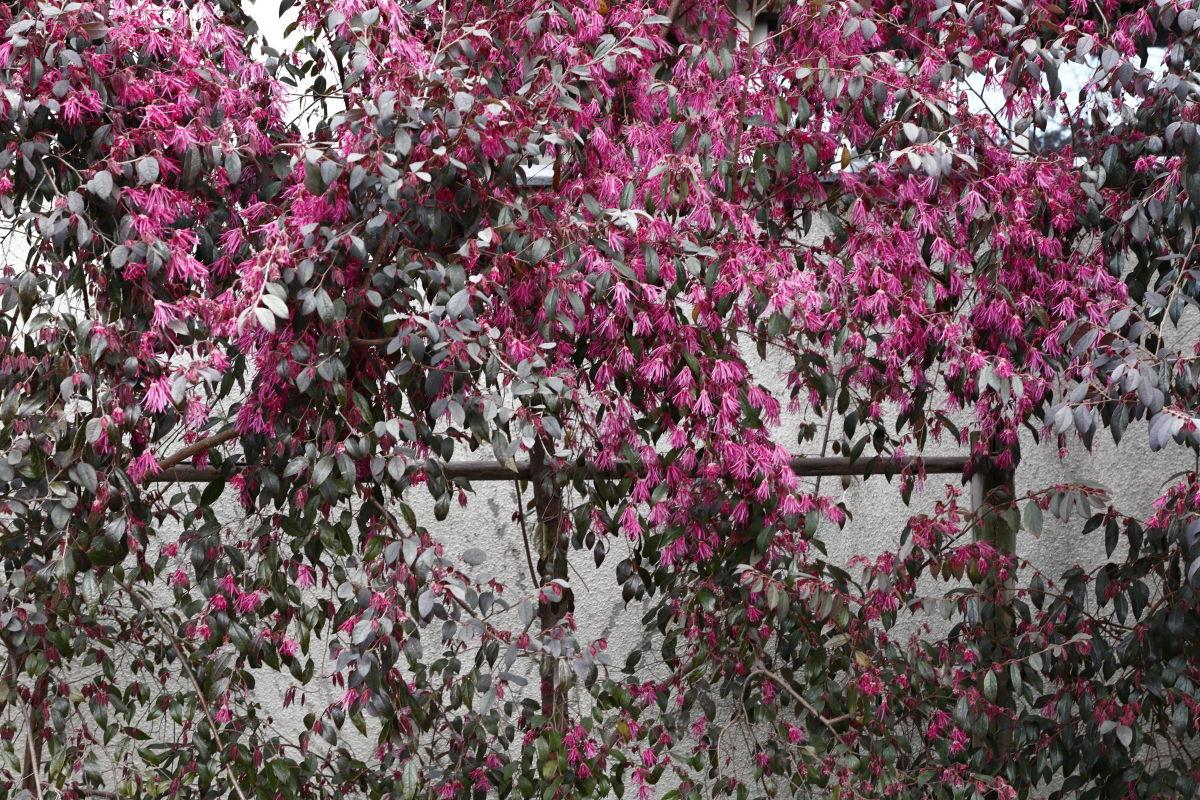 岡本桜守公園(岡本南公園)2020年4月2日