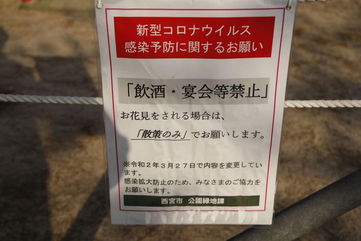 夙川の桜 2020年4月3日 花見は散策のみ
