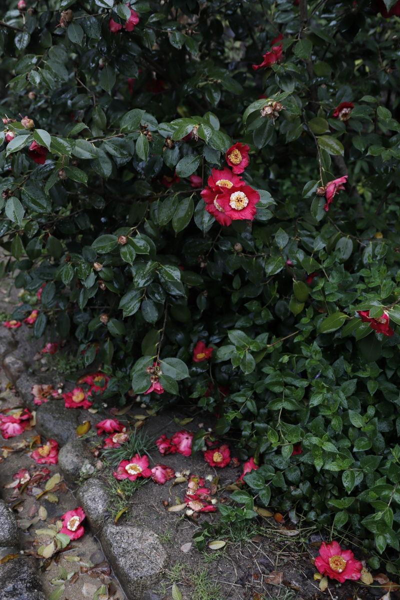 弓弦派神社の花