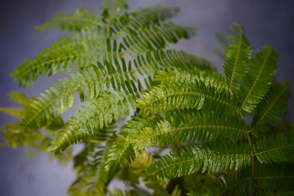 フォレストグリーン SIGMA fp作例写真