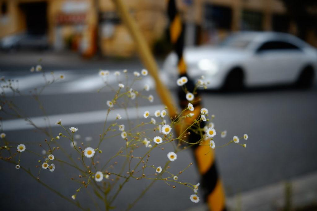 道端の花 SIGMA fp作例写真