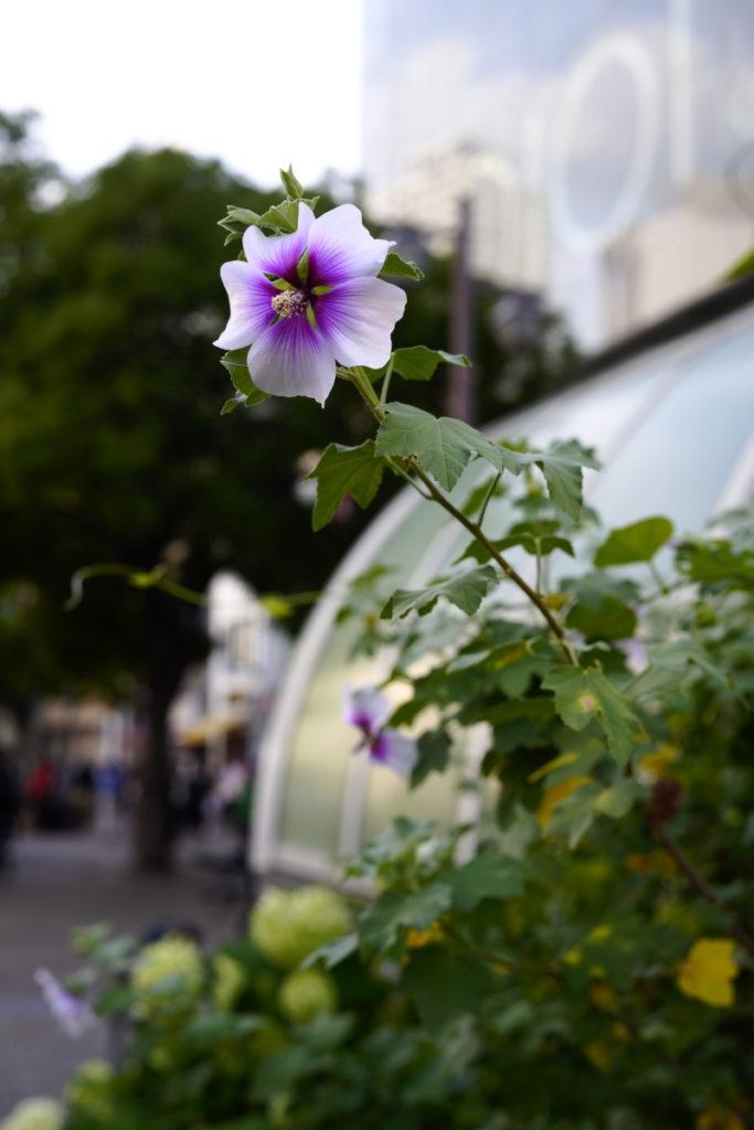 風景 SIGMA fp作例写真 花