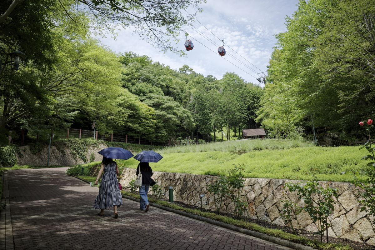 初夏の神戸布引ハーブ園