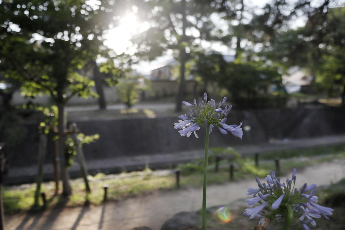 夙川の花 CANON EOS Kiss M