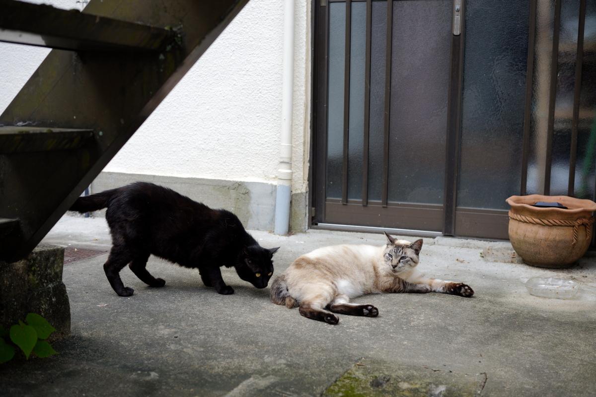 布引の滝の近くの猫