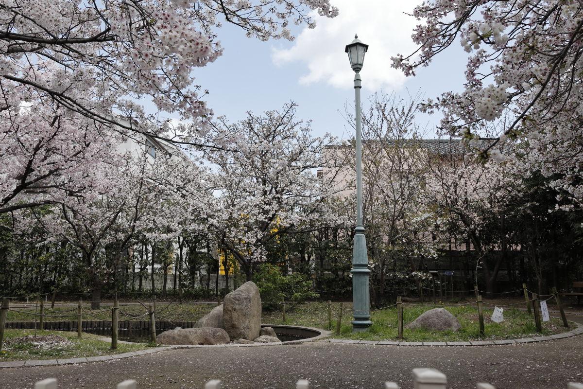 岡本南公園(桜守公園)の桜【開花状況と桜の写真】