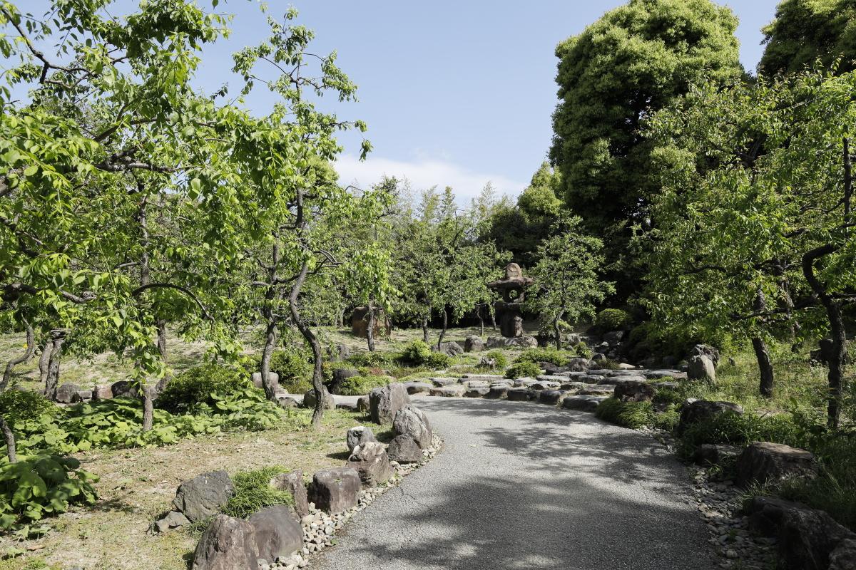春の京都・城南宮 青々とした梅の木