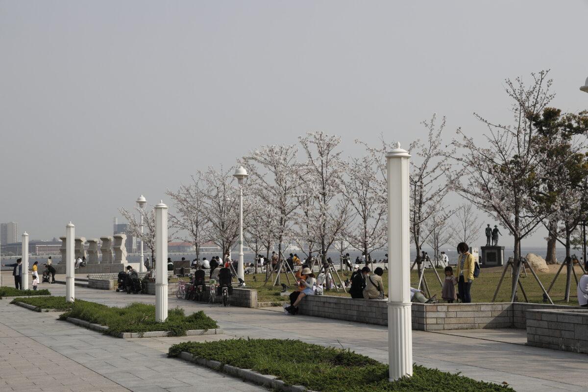 メリケンパークの桜【開花状況と桜の写真】2021年3月29日