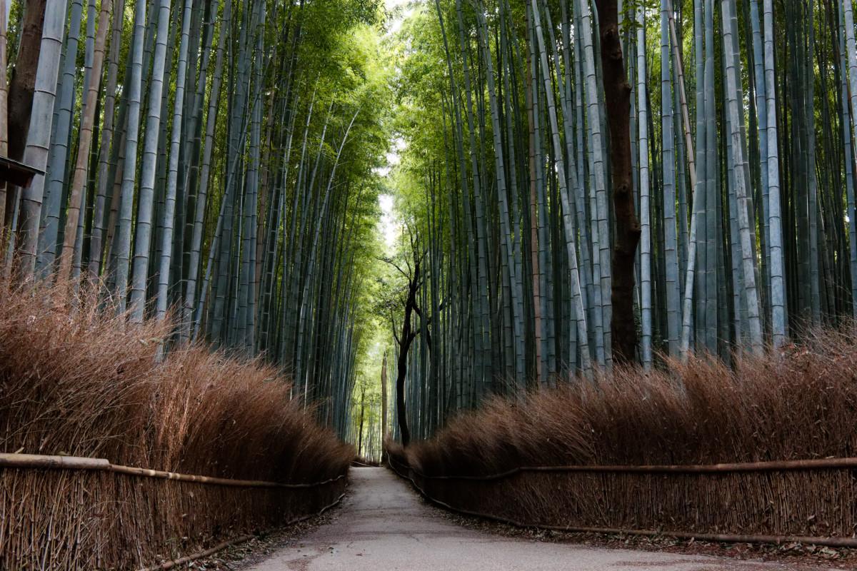 EF-M22mm F2 STM作例写真 京都嵐山の竹林
