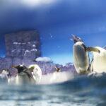 ペンギン EF-M22mm F2 STM作例写真 水族館 海遊館